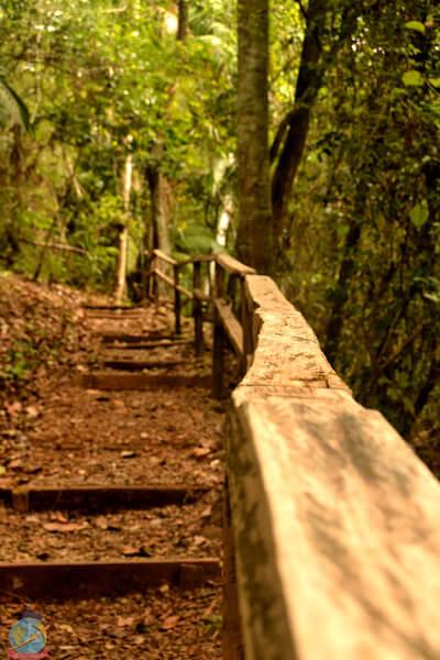 Parque natural metropolitano- Panama Guia vegana
