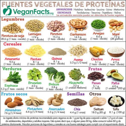 Fuentes veganas de proteínas- Guia Vegana Para principiantes- The Vegan Hopper