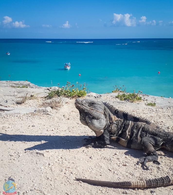 Tulum Iguana, Riviera Maya