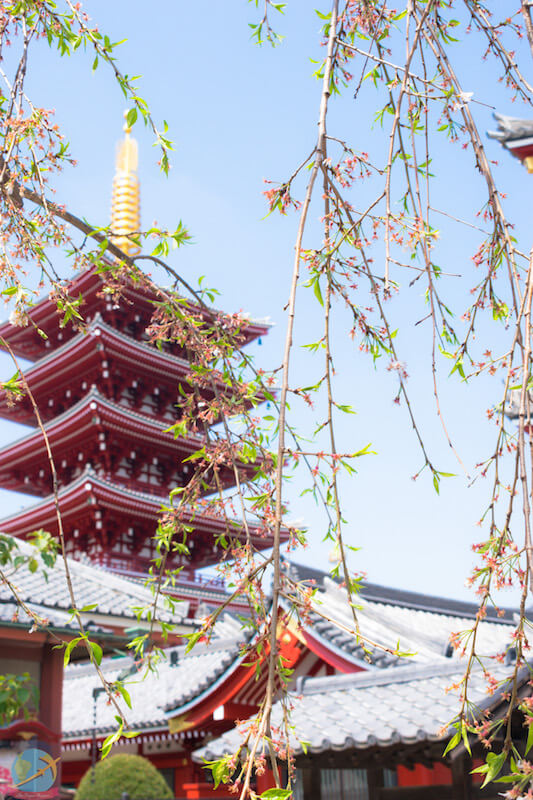 Temple in Asakusa