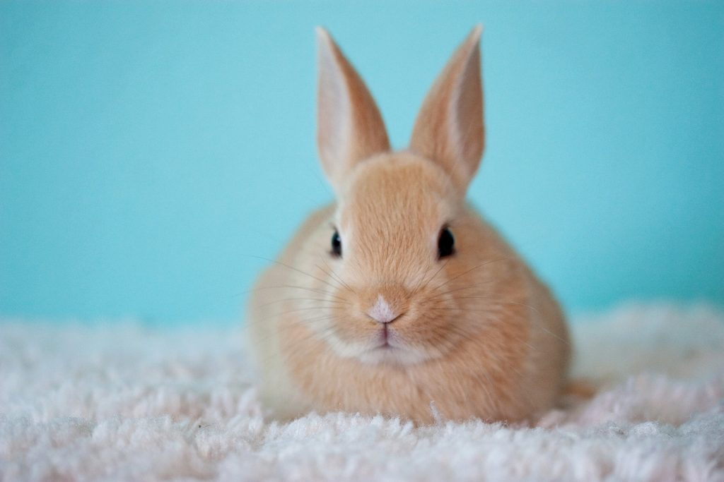 Cute rabbit- vegan and cruelty-free beauty